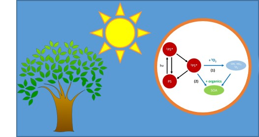 New McNeill Group publication: Modeling Photosensitized Secondary Organic Aerosol Formation in Laboratory and Ambient Aerosols